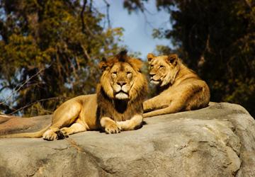 zoo faunia